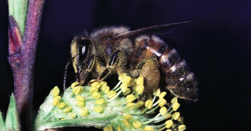 Science_bees_154726989.jpg
